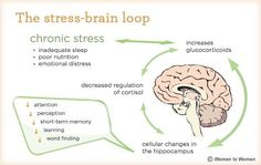 how our brain works, how our brains work and stress and brain