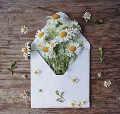 This is a collection of things I like. Wild Flowers, Beautiful Flowers, Beautiful Pictures, My Flower, Flower Power, Daisy Love, Affinity Photo, Birth Flowers, Flower Quotes