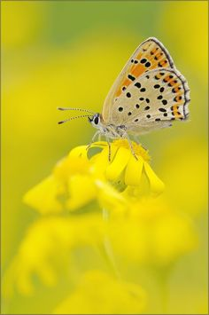 yellow by Andy Mr.owetz on 500px