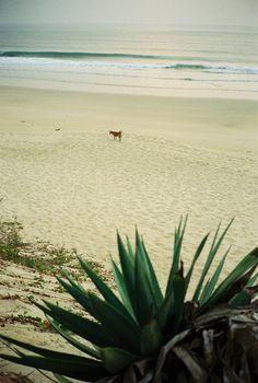 dog on the beach.