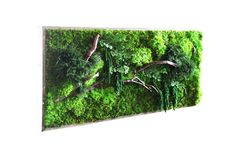 "40"" x 18"" LARGE Plant Painting- No Care Green Wall Art. Real Preserved Plants in Reclaimed Wood Frame & Red Barked Branches."
