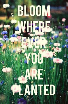 You know God has put you where you are for a particular reason and to fulfill his plan for our lives we need to *bloom* because that is His desire. He loves us and only wants what is best for us so if you are uprooted just accept that He knows you will bloom in a much better place than where you were before.