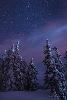 Brisk Starry Night in Winter