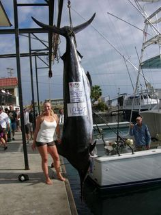 1,020 lb Marlin - INTEGRITY - Kudos to Molly Palmer.