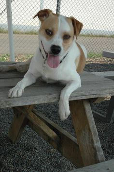 Meet River, an adoptable Terrier looking for a forever home. If you're looking for a new pet to adopt or want information on how to get involved with adoptable pets, Petfinder.com is a great resource.