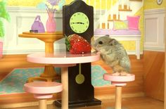 This Tiny Hamster in a Tiny Mansion Is Majorly Precious
