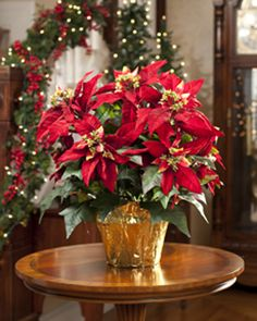 Poinsettas for Christmas! | #christmasflowers #xmas #christmas