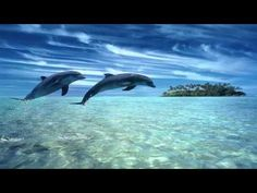 42 Most Beautiful Dolphin HD Wallpaper of 2017 For Your Desktop - Magazine Fuse Dolphin Hd, Dolphin Images, Dolphin Facts, Bottlenose Dolphin, Meditation Musik, Chakra Meditation, Meditation Sounds, Guided Meditation, Pearl City