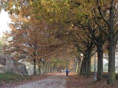 VisitsItaly.com - Welcome to Lucca, Tuscany