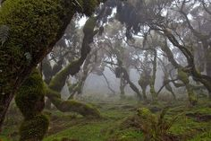 A forest in Ethiopia's Bale Mountains National Park.