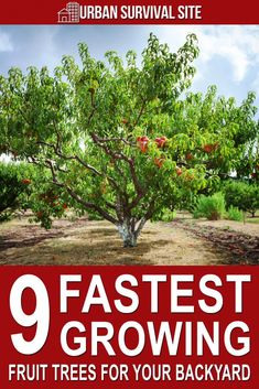 Gardening 263319909450916036 - You won't get a fruit harvest the first year you plant a tree, but if you pick one of the fastest-growing fruit trees, you might get to eat fruit sooner. Source by urbanalan Fruit Tree Garden, Dwarf Fruit Trees, Garden Trees, Espalier Fruit Trees, Planting Fruit Trees, Herbs Garden, Trees To Plant, Growing Vegetables, Growing Plants