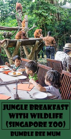 Jungle Breakfast with Wildlife - Singapore Zoo is the only place in the world you can have breakfast with a family of Orangutans, check it out! - Bumble Bee Mum