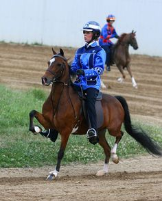 Hackney Pony under saddle