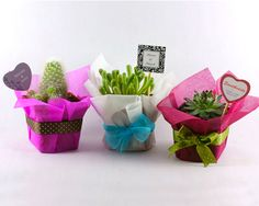 Originales Recuerdos Ecológicos This would be a lovely end of year thank you gift to a teacher.No prickly cacti though! Succulent Party Favors, Succulent Gifts, Succulent Plants, Succulents, Wedding Favours, Wedding Gifts, Bridal Shower, Baby Shower, Mexican Party