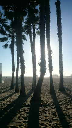 Palms on Venice Beach