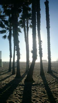 Palms on Venice Beach