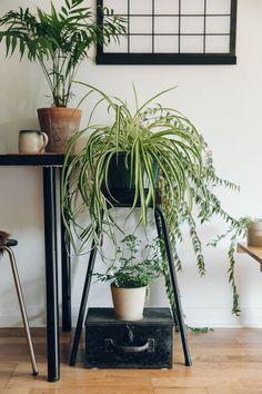 Ben je niet vies van een beetje groen in huis, maar kwijnen zelfs kunstplanten bij jou weg? De kamerplanten in dit lijstje bieden zelfs de grootste verwaarlozer en het donkerste hoekje het hoofd.