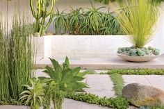 Reincarnated Retreat | California Home + Design - I like the way Horsetails are used with other, more tender succulents here.