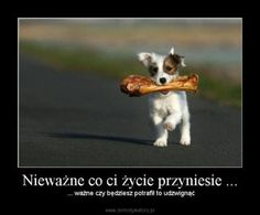 Humor, Inspiration, Animals, Dog, Photography, Life, Quote, Biblical Inspiration, Diy Dog