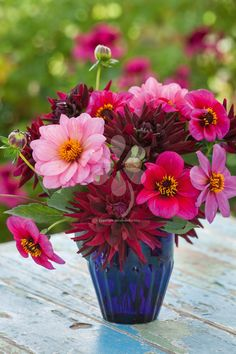 Dahlias tend to be huge and towering plants, but not these - all elegant smaller varieties - ideal for growing in any medium-sized pot or container.