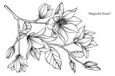 Illustration about Magnolia flower drawing illustration. Black and white with line art on white backgrounds. Illustration of beauty, abstract, decoration - 110941721 Flor Magnolia, Magnolia Flower, Flower Drawing Tutorials, Flower Sketches, Black And White Sketches, Black And White Lines, Line Art, Lotusblume Tattoo, Magnolia Tattoo