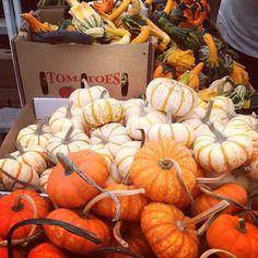#minipumpkins #gourds #farmersmarketnyc via kellidunn on Instagram