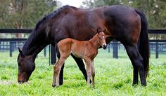 First picture of Black Caviar's filly.  Photo: Georgina Lomax Photography