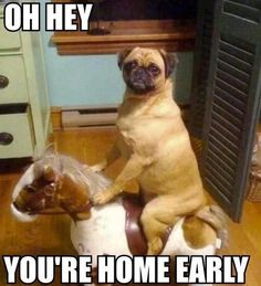 What Your Dog Does While You're At Work. This made me burst out laughing! Lol!