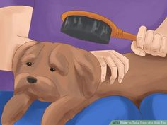 3 Ways to Take Care of a Shih Tzu - wikiHow