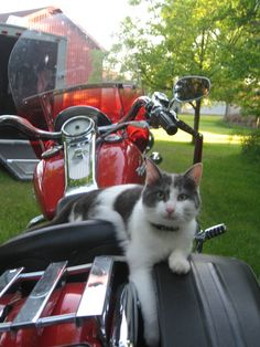 Charlie just chilling on a Harley