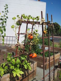 community garden ideas house Pinterest Giardini Idee e Idee