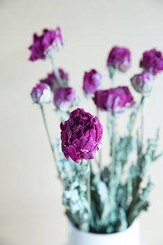 DB01170B-ADF9-4626-A0B8-442A31E1EE22 Fruit, Flowers, Plants, Pentecost, Flora, Royal Icing Flowers, Floral, Plant, Florals