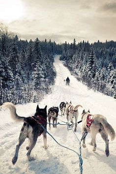 What a cool shot - would you try this? Dog sledding in #Alaska