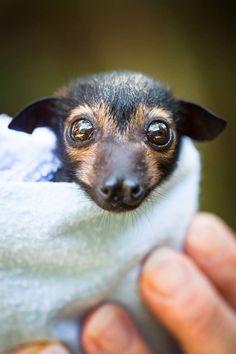 Baby bat. aww!!!