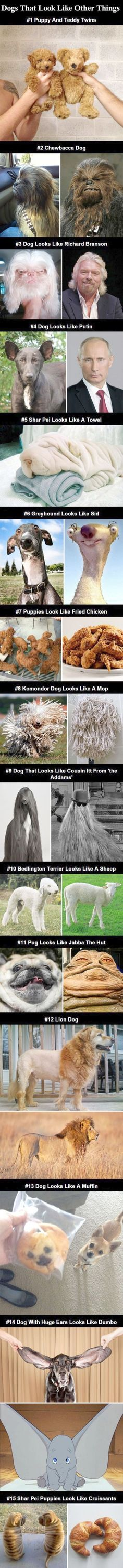 Animal humor dog - Dogs That Look Like Other Things cute animals dogs adorable dog puppy animal pets lol puppies humor funny pictures funny animals funny pets funny dogs Animal Jokes, Funny Animal Memes, Dog Memes, Cute Funny Animals, Funny Animal Pictures, Cute Baby Animals, Funny Cute, Funny Dogs, Animals And Pets