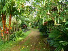 Princeville Botanical Gardens, Kauai, Hawaii Aho Nui Gardens, 2014 Amy Riggs photographer, www.lookintohawaii.com