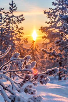 Finnish Snow and Sun intoxicate one's eyes.