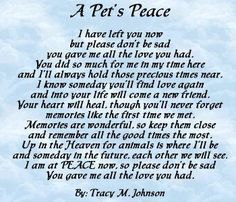 Rip Sadie, LaCie, sancho, thumbs, Monroe, Lilly, Katy did, Lisa,Cory,ginger,Lana,braunson,hunter,bear,fish bait, Jessica, tiger,gramps,jasmine,Rudy ,jake...