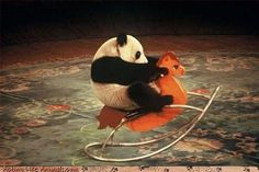 FFFFOUND! | Acting Like Animals – Silly Animals. Being Funny Is ...