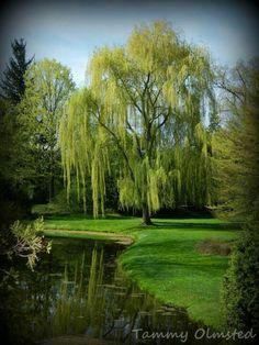 Gorgeous! Dow Gardens 050713