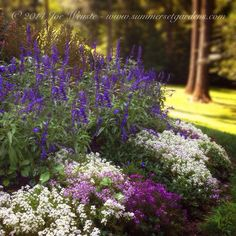 A NJ front yard flower bed in August. Blues, whites and lavender color scheme.   Landscape, garden design and construction services in the NJ and NY areas.    845-590-7306    Summerset Gardens Elegant Landscape Design, Fine Workmanship    http://summersetgardens.com