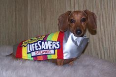 The love of a good dog can be a real Lifesaver.