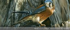 rebecca latham artist | Rebecca Latham Wildlife Art - Watercolor Paintings