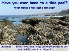 lesson one PowerPoint & challenge questions for crystal cove tide pool visit Science Classroom, Teaching Science, Teaching Resources, Teaching Ideas, Ocean Projects, Science Projects, Magic School Bus, Tot School, Distance Learning Programs