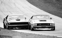 dodge challenger and plymouth cuda trans am racing