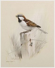 VK is the largest European social network with more than 100 million active users. Watercolor Artwork, Watercolor Bird, Animal Graphic, Acrylic Painting Lessons, Color Pencil Art, Bird Drawings, Bird Pictures, Pastel Art, Wildlife Art