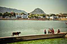 . Pushkar - Vamos para índia: Fotos MARCELLA KARMANN.