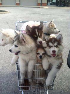 my doggies in trolley