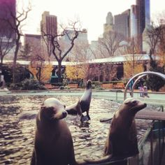 Lunchtime. Central Park Zoo