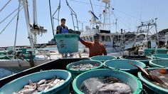 Local fisheries have begun a debris cleanup near the Fukushima plant for the first time since the tsunami-triggered nuclear disaster. However a plan to start trial fishing next year may face a setback as a nearly-completed ice wall is failing to halt water contamination.